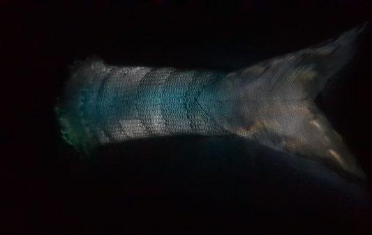 Leviathan-ClémentCogitoreavecMaisonduPli